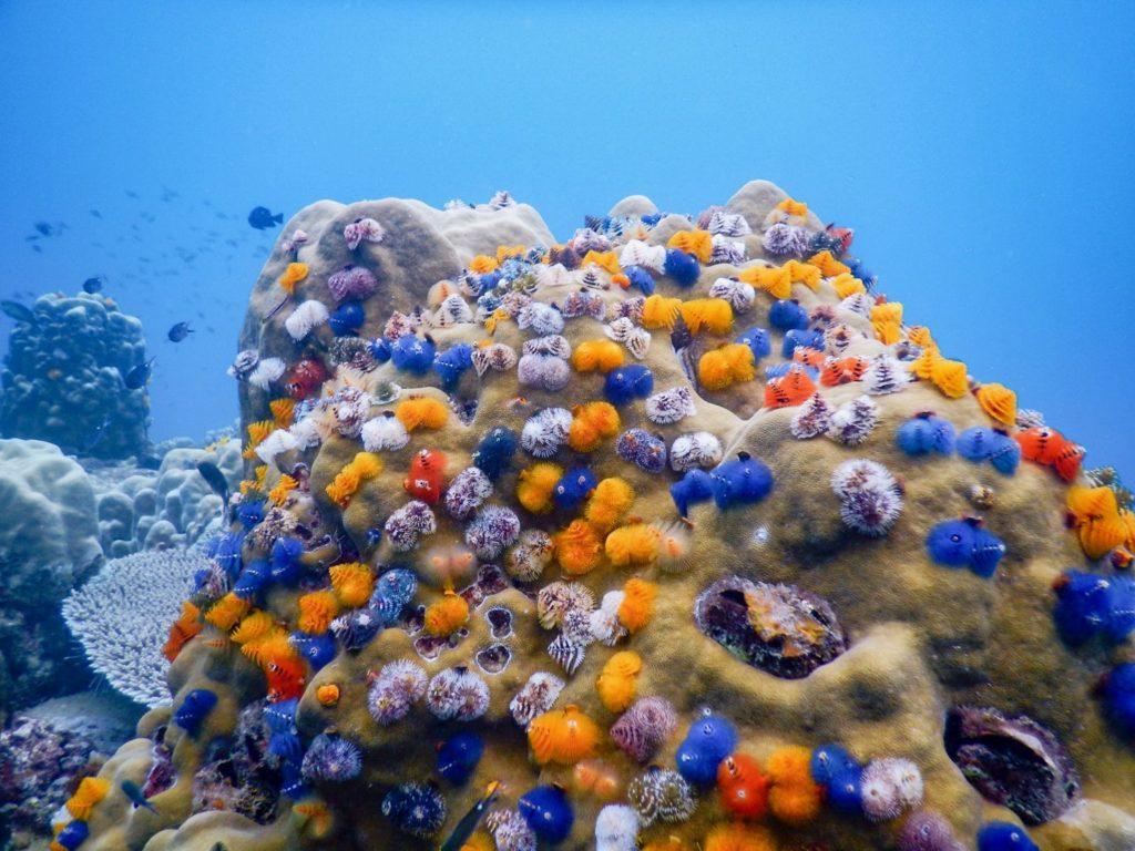 タオ島ダイビング